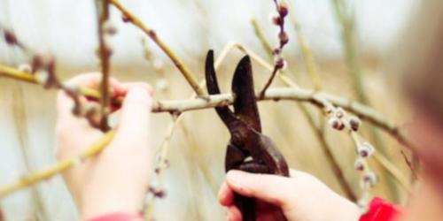 Sisterhood_pruning